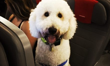 The Hammer Falls: DOT Issues Guidance on Emotional Support Animals